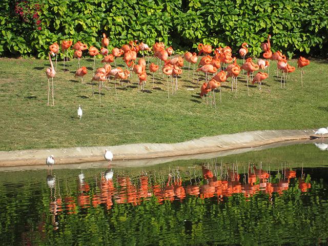знаменитое озеро фламинго в Jungle Island